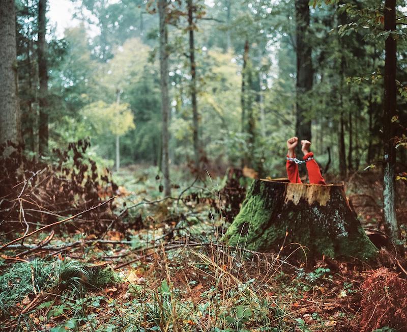 Andrea Olga Mantovani photographie l'agonie d'une forêt