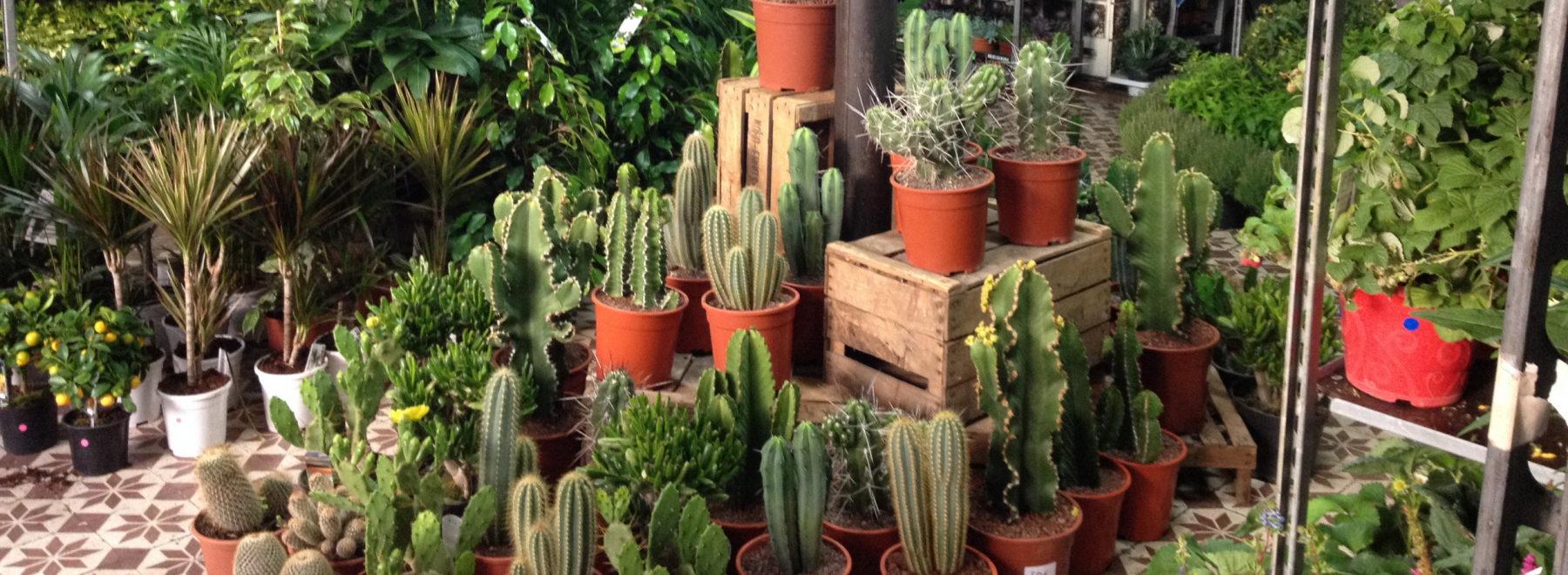 Des plantes à 2, 5 ou 10 €